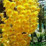 Orquideas (3)