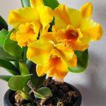 Orquideas Marinas Elisabeta 2