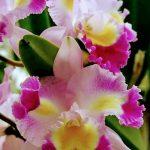 Orquideas by Fátima Botaro 2204