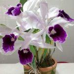 Orquideas by Rhose Nascimento 0106 1